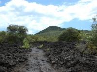 Volcanic terrain on Rangitoto