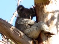 Kangaroo Island