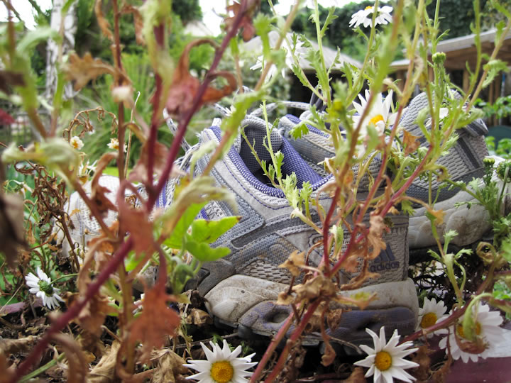 Shoeplant
