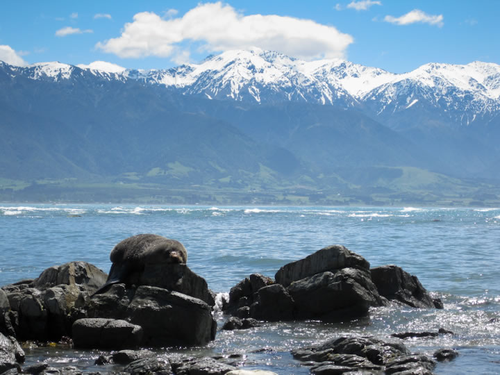 Walking around Kaikoura 2