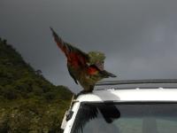 Kea-MilfordRoad-FiordlandNP (17 of 22)