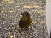 Kea-TheDivide-FiordlandNP (4 of 5)