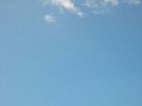 Rangitoto Wildlife alt
