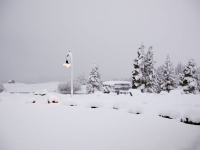 First NZ Snow